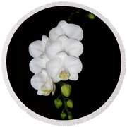 White Orchids On Black Round Beach Towel