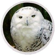 White Owl Round Beach Towel by Rainer Kersten