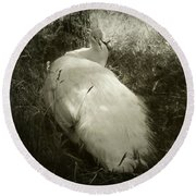 Round Beach Towel featuring the photograph White Peacock Lounging In The Shade by Katie Wing Vigil