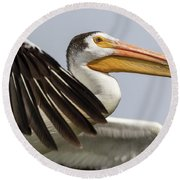 White Pelican 2016-3 Round Beach Towel by Thomas Young