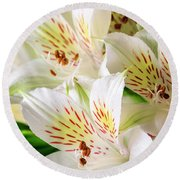 White Peruvian Lilies In Bloom Round Beach Towel