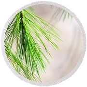 Round Beach Towel featuring the photograph White Pine Branch by Christina Rollo