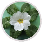 Round Beach Towel featuring the photograph White Primrose by Terence Davis