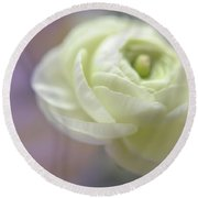 Round Beach Towel featuring the photograph White Ranunculus Bud by Jenny Rainbow