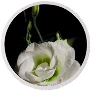 White Rose On Black Round Beach Towel