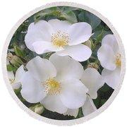 White Roses Bloom Round Beach Towel