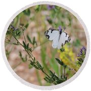White-skipper On Lupine Round Beach Towel