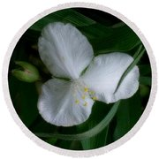 White Spiderwort Blossom Round Beach Towel by Louise Kumpf