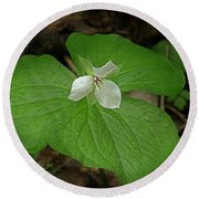 Round Beach Towel featuring the photograph White Spring Trillium by Mike Eingle