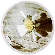 White Summer Daisy Denuded Of Its Petals Round Beach Towel