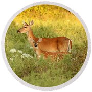 White-tail Doe And Fawn In Meadow Round Beach Towel