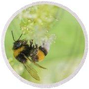 White-tailed Bumblebee - Bombus Lucorum Round Beach Towel by Jivko Nakev