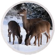 White-tailed Deer - 8855 Round Beach Towel