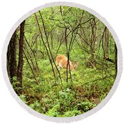 Round Beach Towel featuring the photograph White-tailed Deer In A Misty, Pennsylvania Forest by A Gurmankin