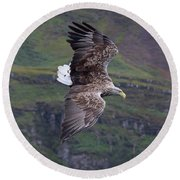 White-tailed Eagle Banks Round Beach Towel