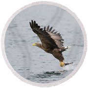 White-tailed Eagle Catching Dinner Round Beach Towel