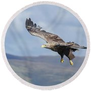 White-tailed Eagle On Mull Round Beach Towel