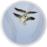 White-tailed Kites Food Exchange Round Beach Towel