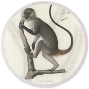 White Throated Guenon, Cercopithecus Albogularis Erythrarchus Round Beach Towel