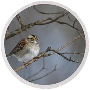 Round Beach Towel featuring the photograph White-throated Sparrow by Living Color Photography Lorraine Lynch