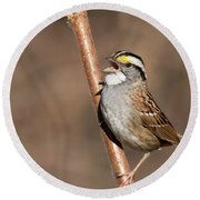 Round Beach Towel featuring the photograph White-throated Sparrow by Mircea Costina Photography