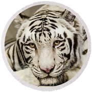 White Tiger Looking At You Round Beach Towel