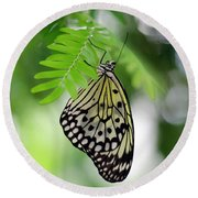 White Tree Nymph Butterfly 2 Round Beach Towel by Marie Hicks