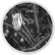Round Beach Towel featuring the photograph White Tulip June 2016 Bw.  by Leif Sohlman