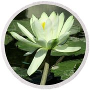 Round Beach Towel featuring the photograph White Water Lily 1 by Randall Weidner