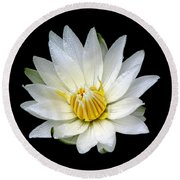 White Waterlily With Dewdrops Round Beach Towel by Rose Santuci-Sofranko