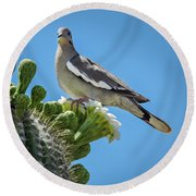 Round Beach Towel featuring the photograph White Winged Dove On Cactus Flower by Penny Lisowski