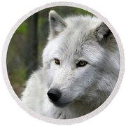 White Wolf With Golden Eyes Round Beach Towel