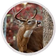 Whitetail #682 Round Beach Towel