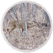 Whitetail Deer 1171 Round Beach Towel by Michael Peychich