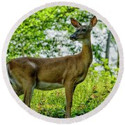 Round Beach Towel featuring the photograph Whitetail Deer  by Thomas R Fletcher