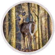 Whitetail Winter Morning Round Beach Towel