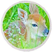Whitetailed Deer Fawn Round Beach Towel