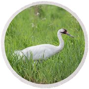 Whooping Crane 2017-2 Round Beach Towel by Thomas Young