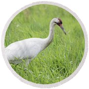 Whooping Crane 2017-3 Round Beach Towel by Thomas Young