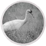 Whooping Crane 2017-4 Round Beach Towel by Thomas Young