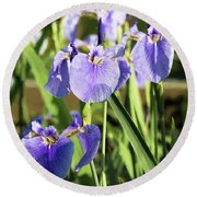 Wild Alaskan Irises IIi Round Beach Towel