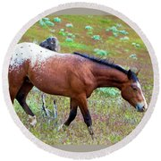 Wild Appaloosa Stallion Round Beach Towel