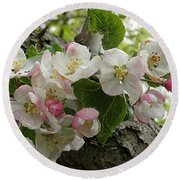 Round Beach Towel featuring the photograph Wild Apple Blossoms by Angie Rea