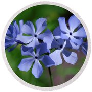 Wild Blue Phlox Dspf0386 Round Beach Towel by Gerry Gantt