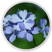Wild Blue Phlox Dspf0387 Round Beach Towel by Gerry Gantt