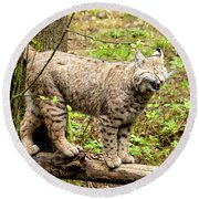 Wild Bobcat In Mountain Setting Round Beach Towel