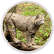 Wild Bobcat Round Beach Towel
