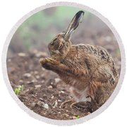 Wild Brown Hare With Eyes Closed, Having A Morning Wash 0124 Round Beach Towel