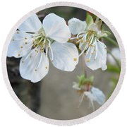 Wild Cherry Blossom On Verona Round Beach Towel