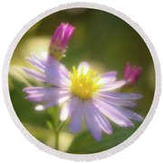 Wild Chrysanthemum Round Beach Towel